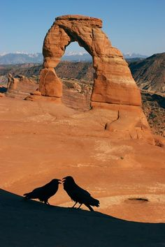 Delicate Arch, Utah Two crows talking American National Parks, Delicate Arch, Crows Ravens, Arches, State Parks, Utah, Deserts, Scenery, Landscapes