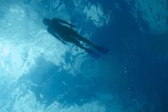 Le Dodo Palmé - C'est l'initiation à la plongée sous marine: du baptême de plongée sous marine, à l'organisation de séjours de la plongée à la Réunion, avec un savoir faire et un équipement professionnel.