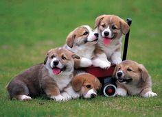A wagon full of cuteness