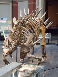 Kentrosaurus aethiopicus, Museum für Naturkunde, Berlin. Crédit Akron/Wikimedia Commons