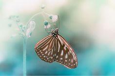 60 Fascinantes Fotografías de Mariposas... - Identi