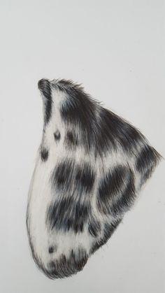 Coloured Pencils, Portrait, Artwork, Animals, Color, Art Work, Animales, Colour, Work Of Art