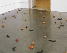 Zoe Leonard: death and decay depicted in art Strange Fruit (for David) (installation view, 1998) (Credit: imageobjecttext.com)