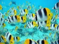 peces de colores libres en el mar