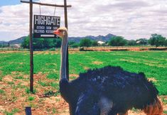 Ostrich-farm-Oudtshoorn, little karoo, south africa South Africa, Horses, Garden, Travel, Animals, Garten, Viajes, Animales, Animaux