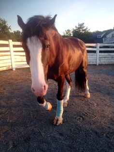 Dressage Horses, Draft Horses, All The Pretty Horses, Beautiful Horses, Horse Love, Horse Girl, Animals And Pets, Cute Animals, Barrel Racing Horses