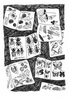 Bertie's Field Journal. Illustration by Louise Warwick.