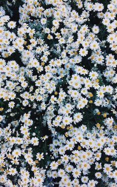 #Instagram #Style #2016 #Moda #Love #California #Flores #Flowers #Flores #Estilo #Amor