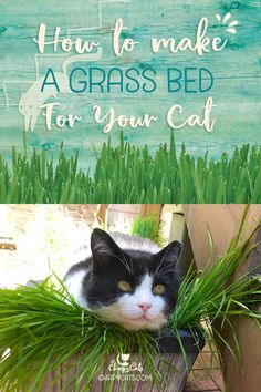 Cat Training Scratching How to make a comfy grass bed for your cat - Cats love new things, and this cat grass bed provides an opportunity to explore and satisfy their curious nature. Cat Grass, Grass For Cats, Cat Whisperer, Cat Garden, Cat Enclosure, Snoopy, Cat Room, Cat Grooming, Cat Furniture