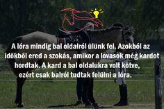 #lovasok #kard #nyeregbefel Movie Posters, Film Poster, Billboard, Film Posters
