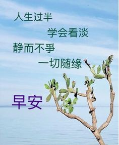 Good Morning Greetings, Good Morning Wishes, Buddha, Chinese, Quote, Quotation, Qoutes, Quotes, Chinese Language