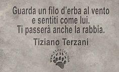 """Grande Terzani, le sue parole mi danno un senso di pace. Un vero maestro di vita.  """"Guarda un filo d'erba al vento e sentiti come lui. Ti passerà anche la rabbia. """" Tiziano Terzani  #tizianoterzani, #fotocitazioni,"""