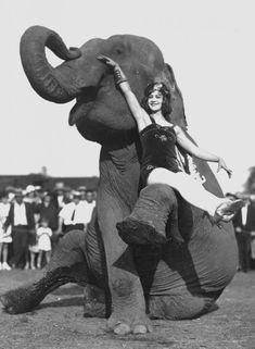 Elephant Scarf Elephant In 2019 Elephant Water For