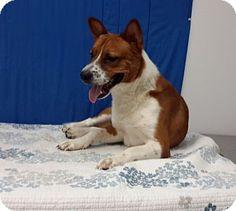 Carthage, NC - Akita Mix. Meet Prince, a dog for adoption. http://www.adoptapet.com/pet/12857816-carthage-north-carolina-akita-mix