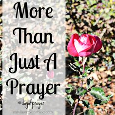 Can we really do more than praying for our nation? - Anchored In His Grace #dayofprayer