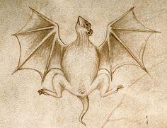 batProsdocimus de Beldemandis, treatise on astrology, Padua ca. 1434. Bodleian Library, MS. Canon. Misc. 554, fol. 164v