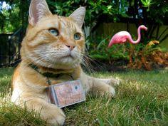 Γάτος-φωτογράφος
