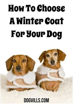 The colder temperatures outside are definitely going to mean you need to know How To Choose A Winter Coat For Your Dog. Check out our easy tips!