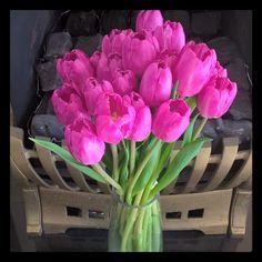 I'm in love with my gorgeous tulips that I got yesterday   #tulips #purpletulips #purple #flowers #flowerstagram #bunchofflowers #mothersdaygift #purpleflowers #favouriteflowers by sezzyclark