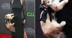 Easy Share | Boycott actress Stacy Haiduk for wearing stuffed cat purse at Emmy Awards! | Yousign.org