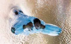 O britânico Thomas Daley durante as semifinais olímpicas da plataforma de 10 m dos saltos ornamentais, no dia 20 de agosto de 2016. Foto incrível.