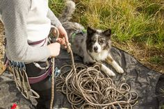 When you are gearing up for a hiking adventure with your pup, injuries might be the last thing on your mind, but a smart dog owner is always prepared. Pack these emergency medical supplies to prevent a minor mishap from turning into a major disaster.