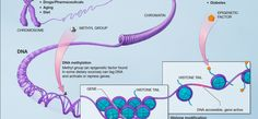 On epigenetics: We are not just our DNA │ PLOS Blogs