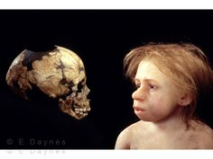 Neanderthal child and fossil skull. Reconstruction of a Neanderthal (Homo neanderthalensis) child based on one of the Roc de Marsal fossils (left). Forensic Facial Reconstruction, Biological Anthropology, Early Humans, Human Evolution, Mystery Of History, Charles Darwin, Ancient History, Archaeology, The Past