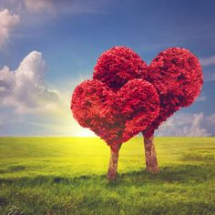 Photo about Heart shape trees couple on green grass field landscape at sunset. Love symbol, concept for Valentine's Day, wedding etc. Image of natural, leaves, metaphor - 47686886 Hd Photos, Stock Photos, Lovers Images, Image Hd, Sunset Love, Happy Wishes, Green Fields, Joko, Photo Heart