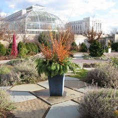 Winter Container Garden at US Botanic Gardens