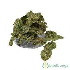 Tanaman Green Paper Leaf