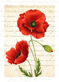 Poppies Flanders field - glicée art print wall decor print home decor gift code CCF-020 by Coucoufun on Etsy