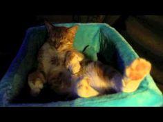 City the Kitty sleep dances. Short and adorable! Original Music, Cat Gif, My Dream, Hilarious, Creatures, Sleep, Kitty, Dance, Dreams