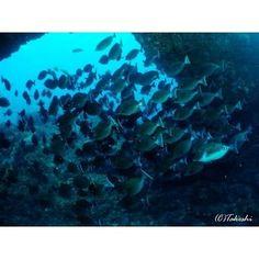 【takeshi19751027】さんのInstagramをピンしています。 《Underwater Photo from My Stock ☆41☆  Arch of Idesari with Sawtail@Hachijojima ニザダイの群れとイデサリのアーチ@八丈島(Apr 2014)  #ダイビング #diving #スキューバダイビング #scubadiving #水中写真 #underwaterphotography #富士フイルム #fujifilm #finepixf30 #海 #sea #ocean #水中風景 #underwater_landscape #アーチ #arch #ニザダイ #sawtail #群れ #魚群 #school_of_fish #dynamic #伊豆 #八丈島 #izu #hachijojima #イデサリ #ダイビング好きな人と繋がりたい #写真好きな人と繋がりたい #写真撮ってる人と繋がりたい》