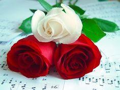 Mensagens Lindas: O menino e a rosa... lindoooooooo demais...