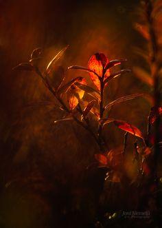 Red Twigs by Joni Niemelä, via 500px