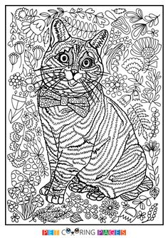 """Free printable Domestic Cat coloring page """"Nala"""" available for download. Simple and detailed versions for adults and kids."""