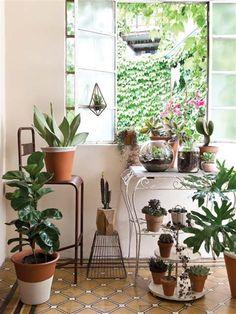 Plantas: especies que decoran y son tendencia - Revista OHLALÁ! - Revista…