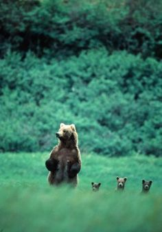 There was a mother bear and three little baby bears