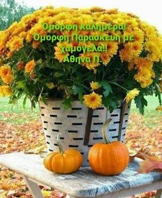Good Morning Good Night, Happy Fall Y'all, Wonders Of The World, Cool Photos, Pumpkin, In This Moment, Autumn, Seasons, Vegetables