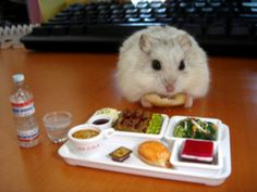 Tiny lunch for a tiny hamster