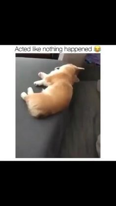 Funny Animal Videos, Cute Funny Animals, Funny Videos, Funny Dogs, Cute Dogs, Dog Stuff, Funny Stuff, Puppys, Acting