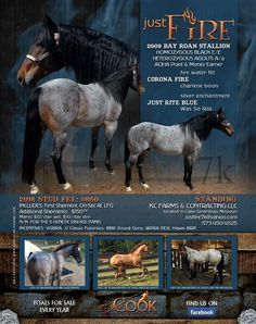 """2009 Bay Roan out of an own Son OF """"Fire Water Flit"""" He is Homozygous Black - so when breeding your . Beautiful Horses, Animals Beautiful, American Quarter Horse, Quarter Horses, Blue Roan, Barrel Horse, Horse World, Sons, Fire"""
