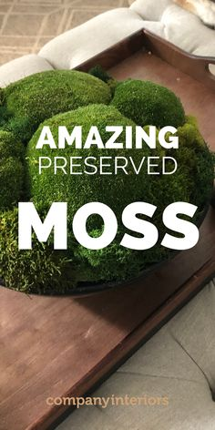 Natural Moss Balls and they make a truly natural setting for your displays. Either displayed in a pot or planter is perfect with some other preserved plants or wood materials. Also looks great hanging from a wall or ceiling and makes amazing acoustic spheres for music rooms ! They require now watering or maintenance of any kind. #mossproducts #mossballs #preservedmoss #mossplanters Money Tree Bonsai, Types Of Moss, Moss Decor, Ivy Wall, Wooden Wreaths, Moss Art, Preserved Roses, Green Wreath, Nature Table