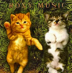 Classic album covers re-imagined with kittens. Roxy Music