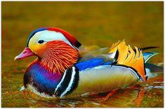 Самые яркие птицы экзотических кровей: u3poccuu