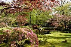 Japanse tuin in Den Haag (foto: Frank van Rossum). Beperkte openstelling (Herfst 2016 8 t/m 23 oktober)