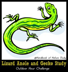 Lizard Anole Gecko Nature Study @handbookofnaturestudy Small Lizards, Study Journal, Background Information, Autumn Nature, Nature Study, Learn To Love, Mini Books, Amphibians, Reptiles