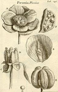 Ilustración científica del siglo XVIII