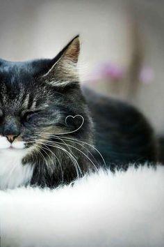 Ich liebe Katzen!